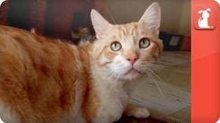 Unadoptables - Sweet, 3-legged cat searching for a home