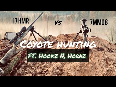 Coyote Hunting With The 17hmr And The 7mm08. FT Hookz N Hornz.