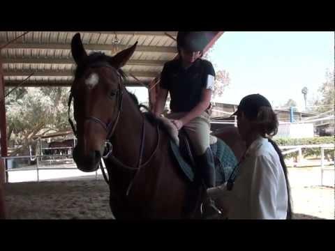 Pony Club D-1 Rating Video