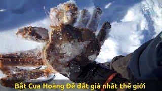 Bắt Cua Hoàng Đế đắt giá nhất thế giới trên biển băng