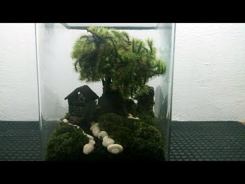 indahnya...-rumah-dan-taman-mini-dalam-tabung-kaca-|-terrarium-tumbuhan-tropis
