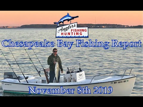 Chesapeake Bay Fishing Report: November 8th 2019