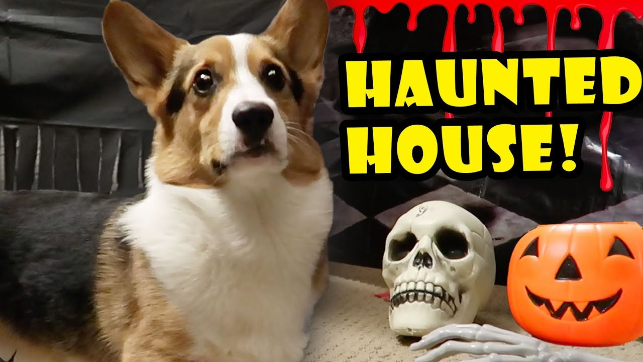 corgi-haunted-house-spooky-halloween-tunnel-life-after-college-ep-568