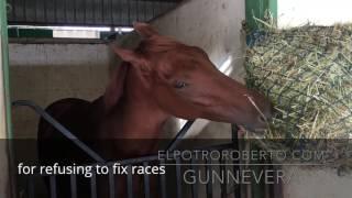 GUNNEVERA 3 yo colt (Will Smith Miami)
