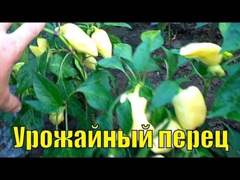 Купить семена Перец сладкий Таежный . Семена почтой и