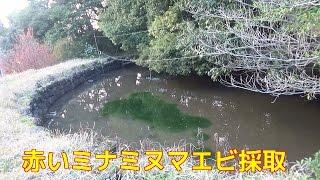 知り合いの池で小さい池で深さも30cm位の小池で探索しました。上から...