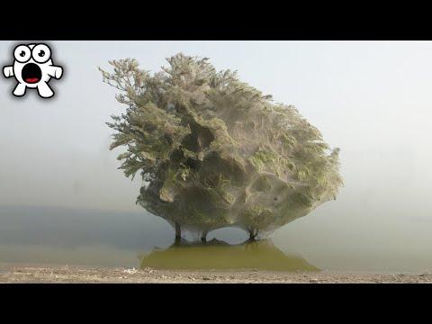 Увидели Такое Дерево? Бегите, Глупцы
