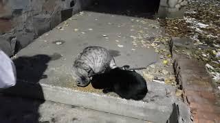 Накормили бездомных котов 🐈 и зашли в гости