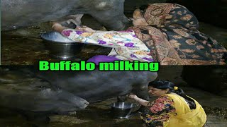 🐃Buffalo milking🥛 by hand milking||my Evening routine||by punjabi cooking and punjabi cultures