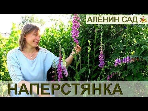 Цветы которые сажают осенью: фото и названия