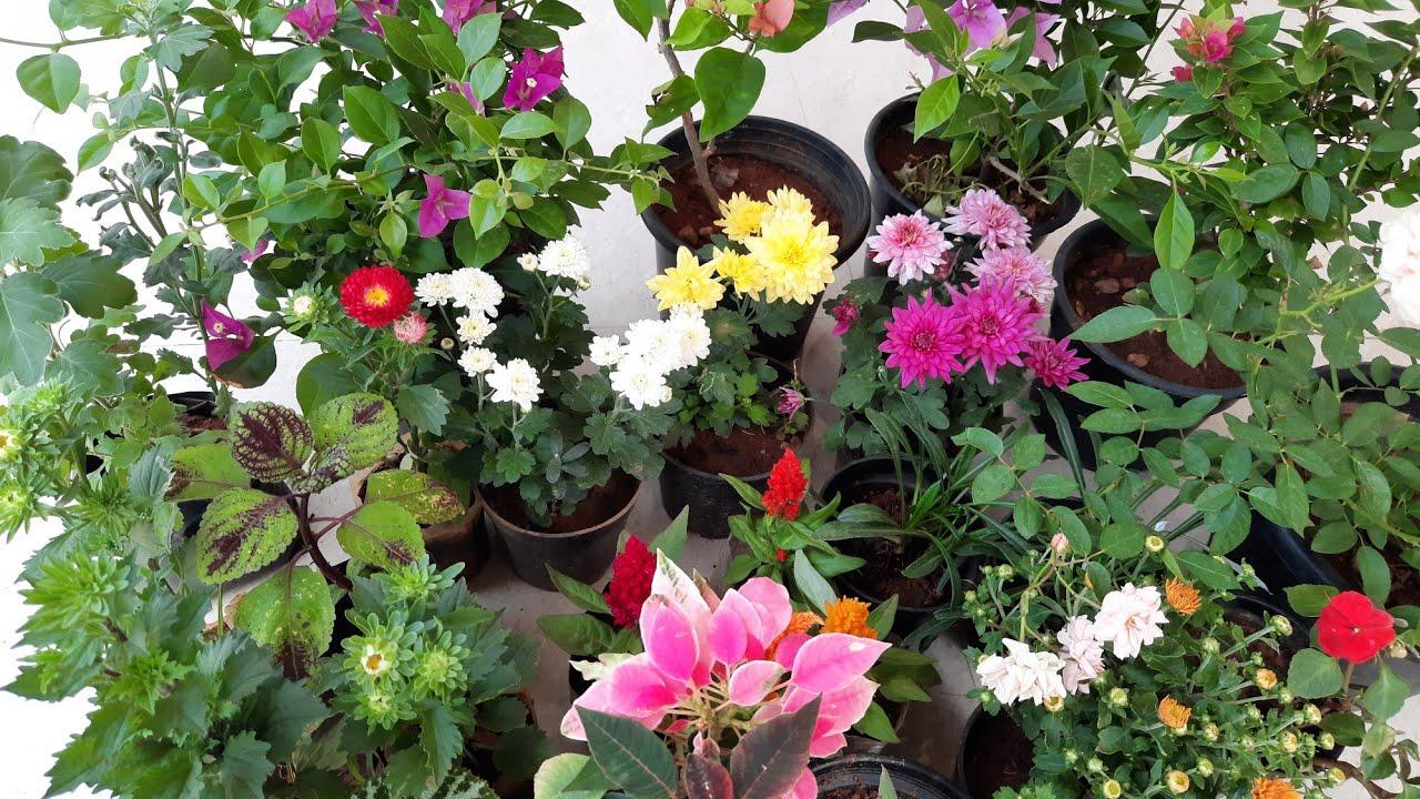 My new plants/പുതിയ ചെടികൾ