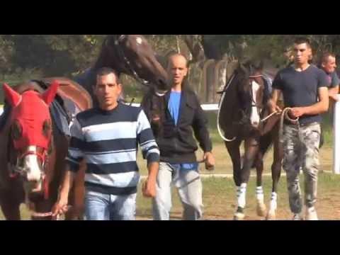 Konji ponovo jure 981