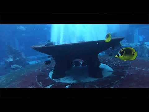Atlantis Dubai – Dive Discovery – Lost Chambers Aquarium