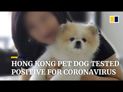 Hong Kong Pet Dog Belonging To Covid-19 Patient Tested 'weak Positive' For Coronavirus