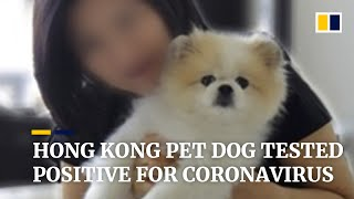 Subscribe to our channel for free here: https://sc.mp/subscribe- a pet dog belonging covid-19 patient in hong kong has tested 'weak posit...