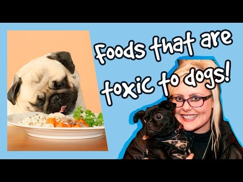 The A - Z of Toxic Food For Dogs! Foods You Should Never Feed Your Dogs