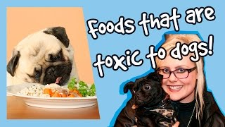 Have you ever wondered what foods you shouldn't be feeding your dog...