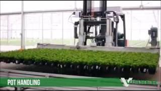 как выращивают орхидеи для продажи