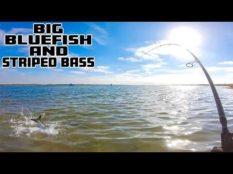BIG BLUEFISH - Topwater Striped Bass - Underwater Footage - Surf Fishing Long Island ,  New York