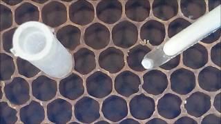 Вывод маток 2016 г Китайский шпатель с подсветкой Conclusion queens 2016 Chinese spatula Illuminated