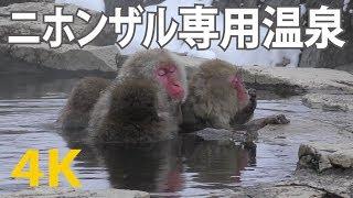 【4K動画】温泉に入る猿の親子(地獄谷野猿公苑) 長野県の地獄谷温泉(...