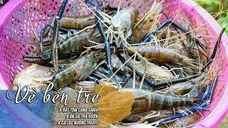 Về BẾN TRE Ăn Gà Thả Vườn | Bắt Tôm Càng Xanh | Ăn Cá Lóc Nướng Trui