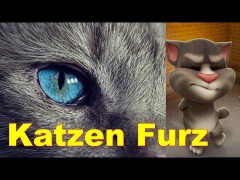 Katzen-Furz 2018