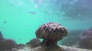 underwater experiement