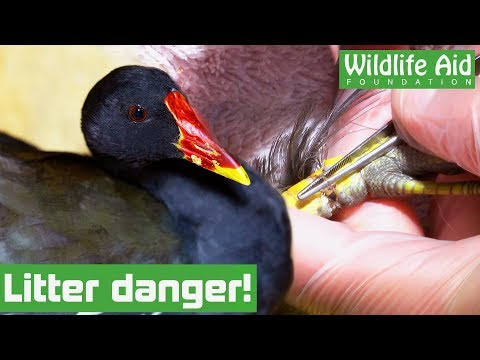This bird is FIGHTING for its life after someone dropped LITTER!