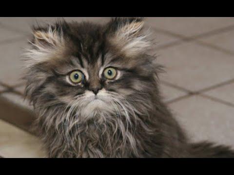 Вопрос: Как расположить к себе незнакомую кошку кота?