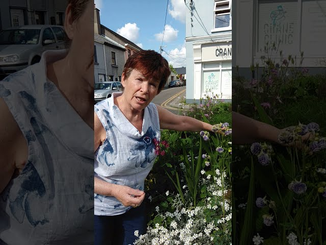 A Visit to Dr Clare's Herb Garden in Sea Road