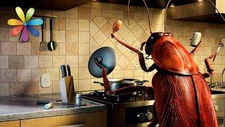 видео Как избавиться от тараканов