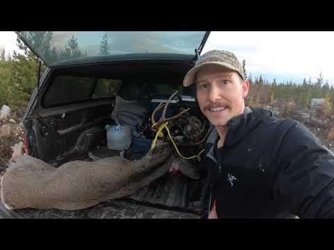 Big Buck Down - Solo Deer Hunting In British Columbia- October 2019 (Catch,Clean,Cook)