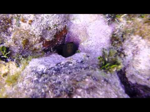 Florida Keys 2014 gopro