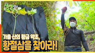 [2TV 생생정보] 가을 산의 황금 약초, 황절삼을 찾아라! | KBS 211013 방송