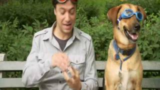 Snout Soother By Natural Dog Company On Animal Planet