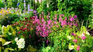 English Cottage Garden Design Ideas