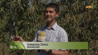 Растителна защита: Икономически важни болести при ябълки и череши, автор Диана Александрова