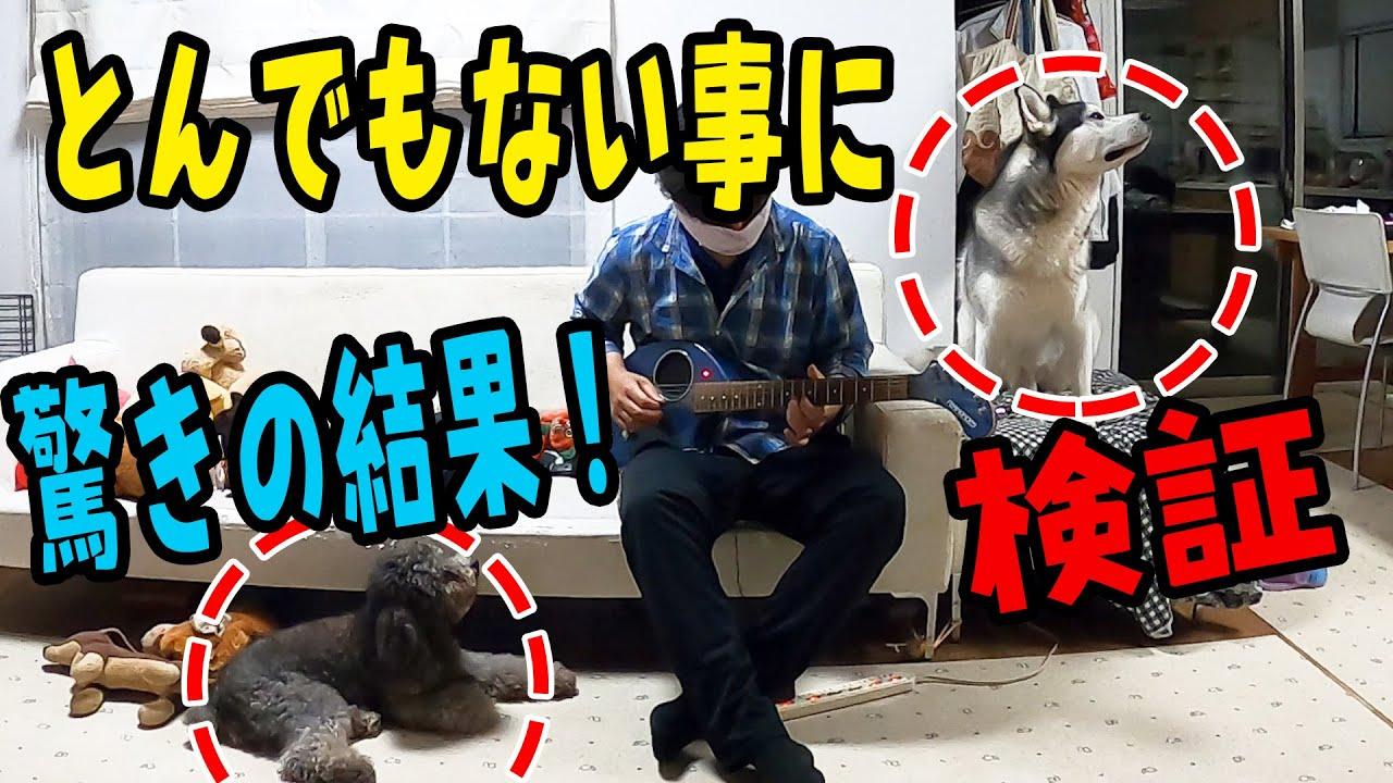 犬の前でギターを弾くとどうなるか?検証 驚きの結果!