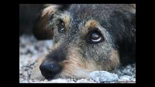 Путь домой «Бездомные собаки»