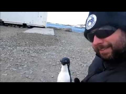 Close encounter with an Adelie penguin