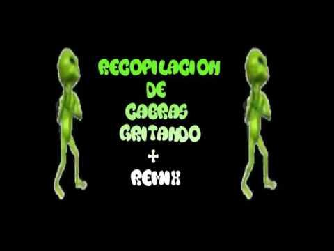 CABRAS GRITANDO REMIX