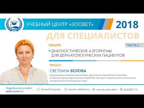 Светлана Белова в УЦ ЗООВЕТ   Дерматология. Часть 1/2
