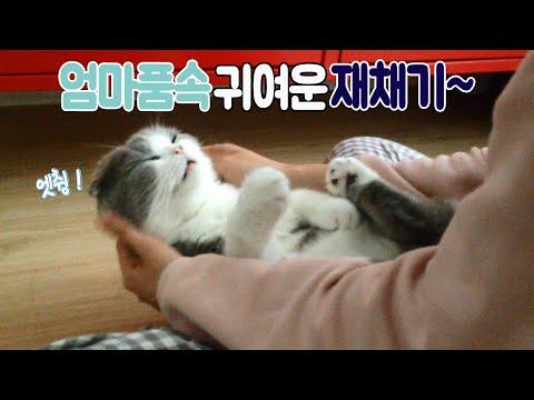 엄마 품에 쏙~! 8살, 다 큰 아기고양이 애교 Precious kitty in my arms