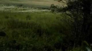 Sarna koza