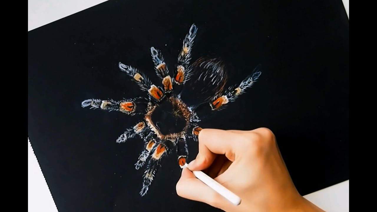 Tarantula Drawing Colored Pencils On Black Paper Youtube