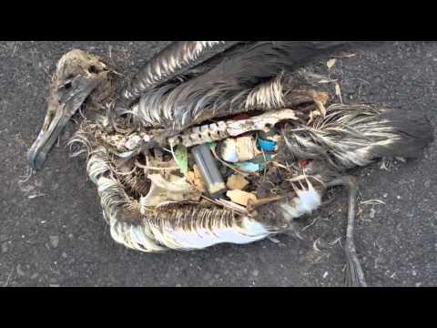 Ecotafel: alles over plastic
