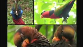 Papua New Guinea, Pacific Islands travel destination