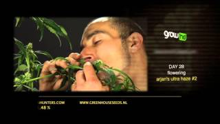 Arjan's Ultra Haze #2 - Green House Grow Sessions