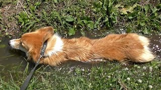 水と走り回るのが大好きだから、日々泥だらけ よろしければチャンネル登...